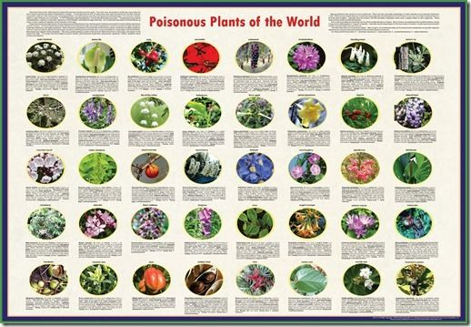 Poisonous Plants: A Gardeners Guide To The Top 100 ...