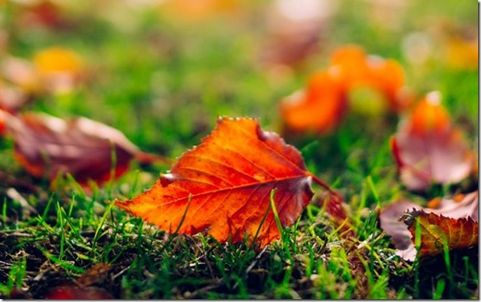 Autumn-Wallpaper-autumn-35867771-500-313