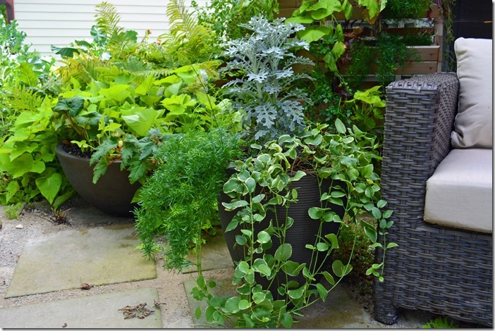 Container Gardens Front Patio
