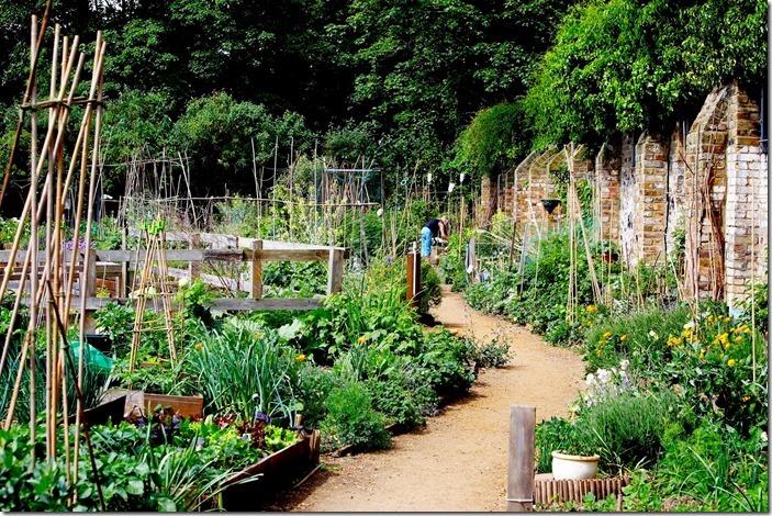 King Henry's Walk Garden N1 (veg garden) © Open Garden Squares Weekend