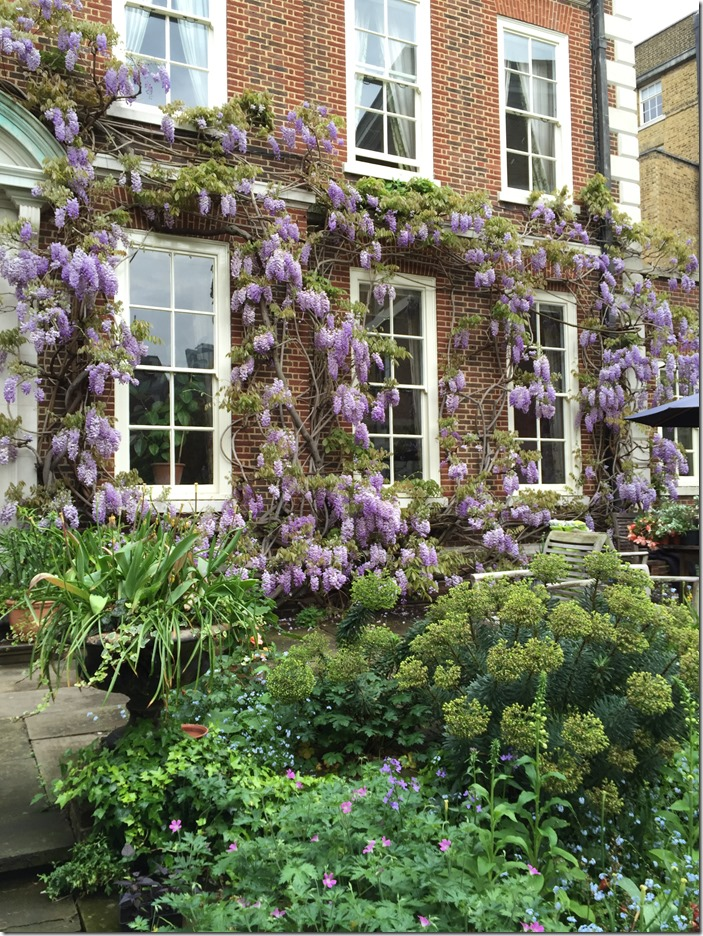 The Master's Garden EC4 (wisteria) © Open Garden Squares Weekend