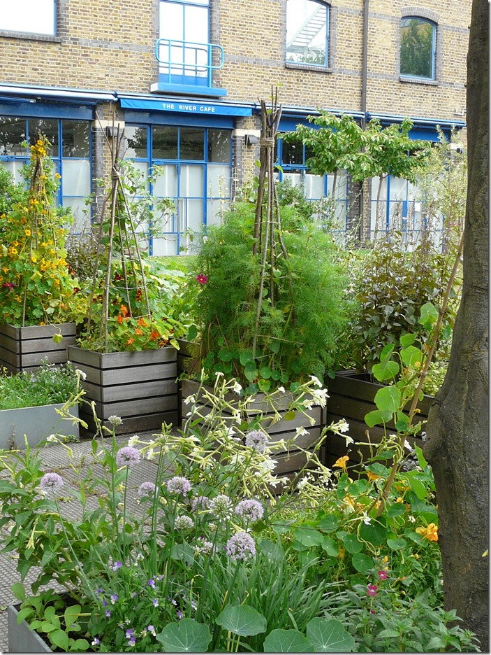 The River Cafe W6 © Diana Jarvis Open Garden Squares Weekend