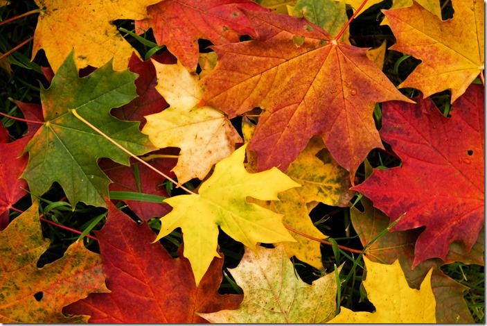 autumn-leaves-wallpaper-photo