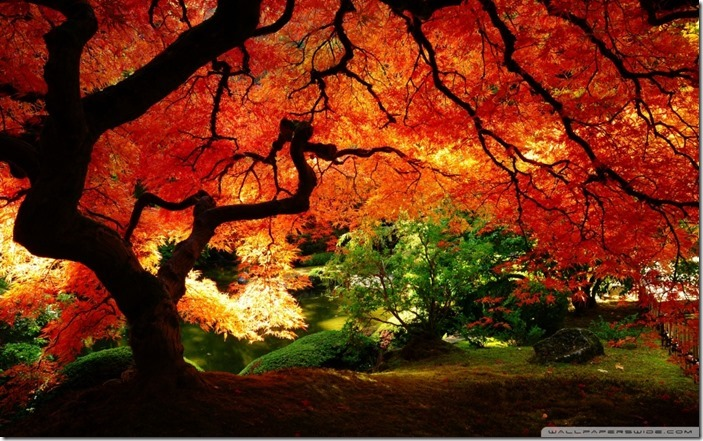 beautiful_autumn_2-wallpaper-960x600