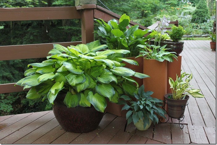 container_gardening_IMG_0009_900x600