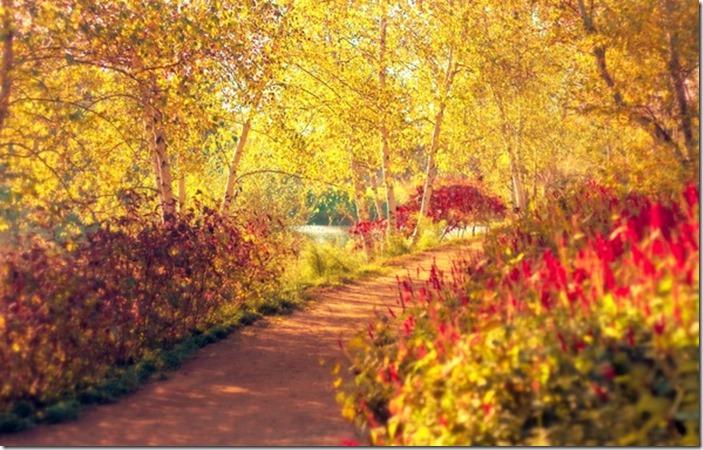 osen-park-derevya-berezy